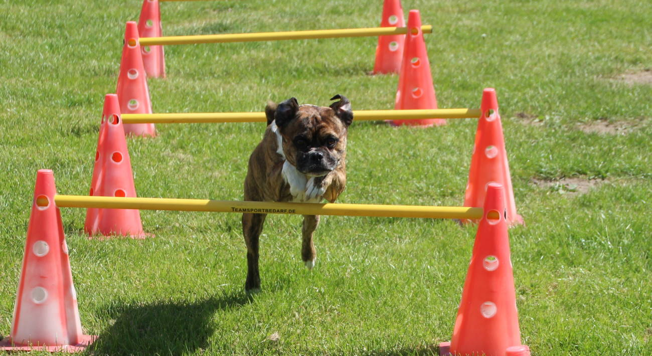 Hundeschule in Bad Oldesloe